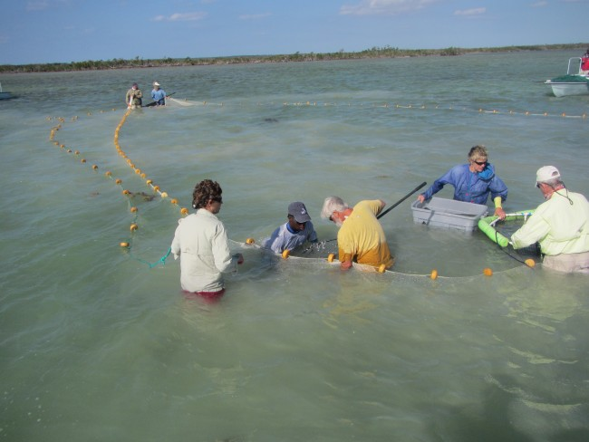 A crew comprised of scientists, guides, and volunteers tag bonefish as part of the Bahamas Initiative.