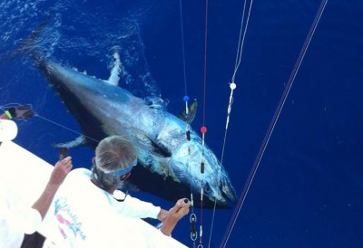 Reel Worthless Bluefin Tuna release