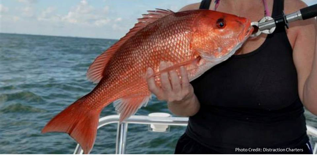 red_snapper_2