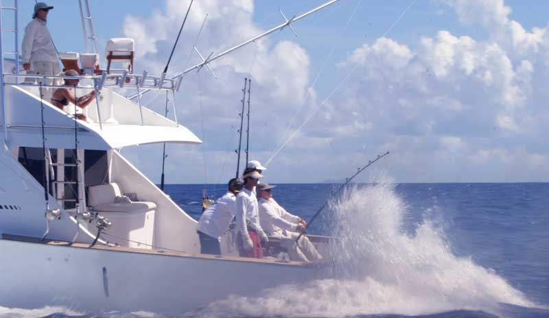 Blue Marlin Fishing Chronicles—Captain Mike Lemon