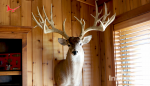 InTheBite InTheSight: Cotton Mesa Trophy Whitetail Ranch