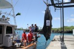 Kona Grander– Big Island Marlin Tournament