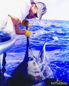 Chris sheeder with a large marlin