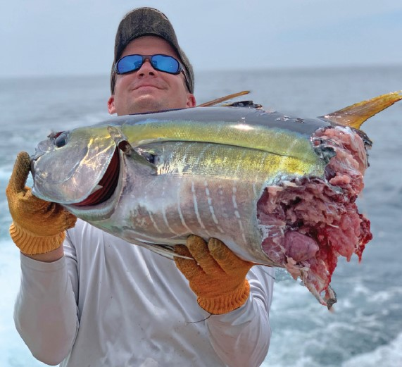yellowfin tuna bitten in half