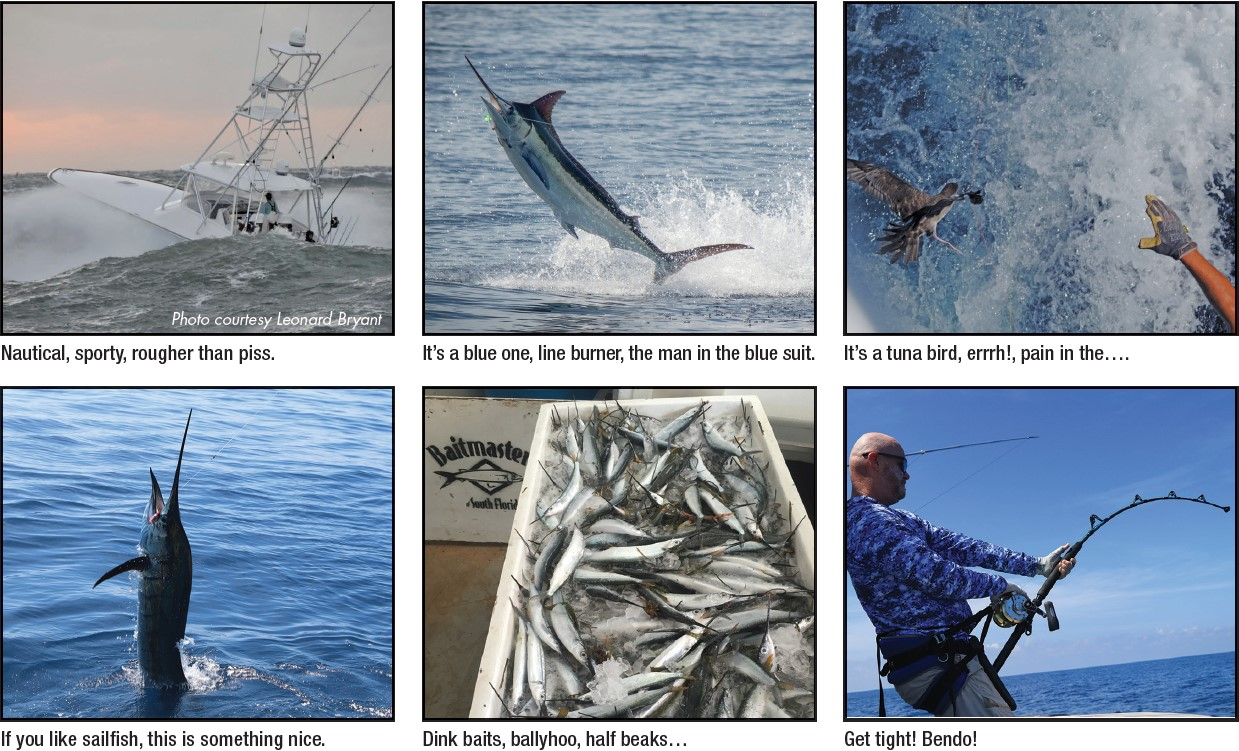 various fishing images