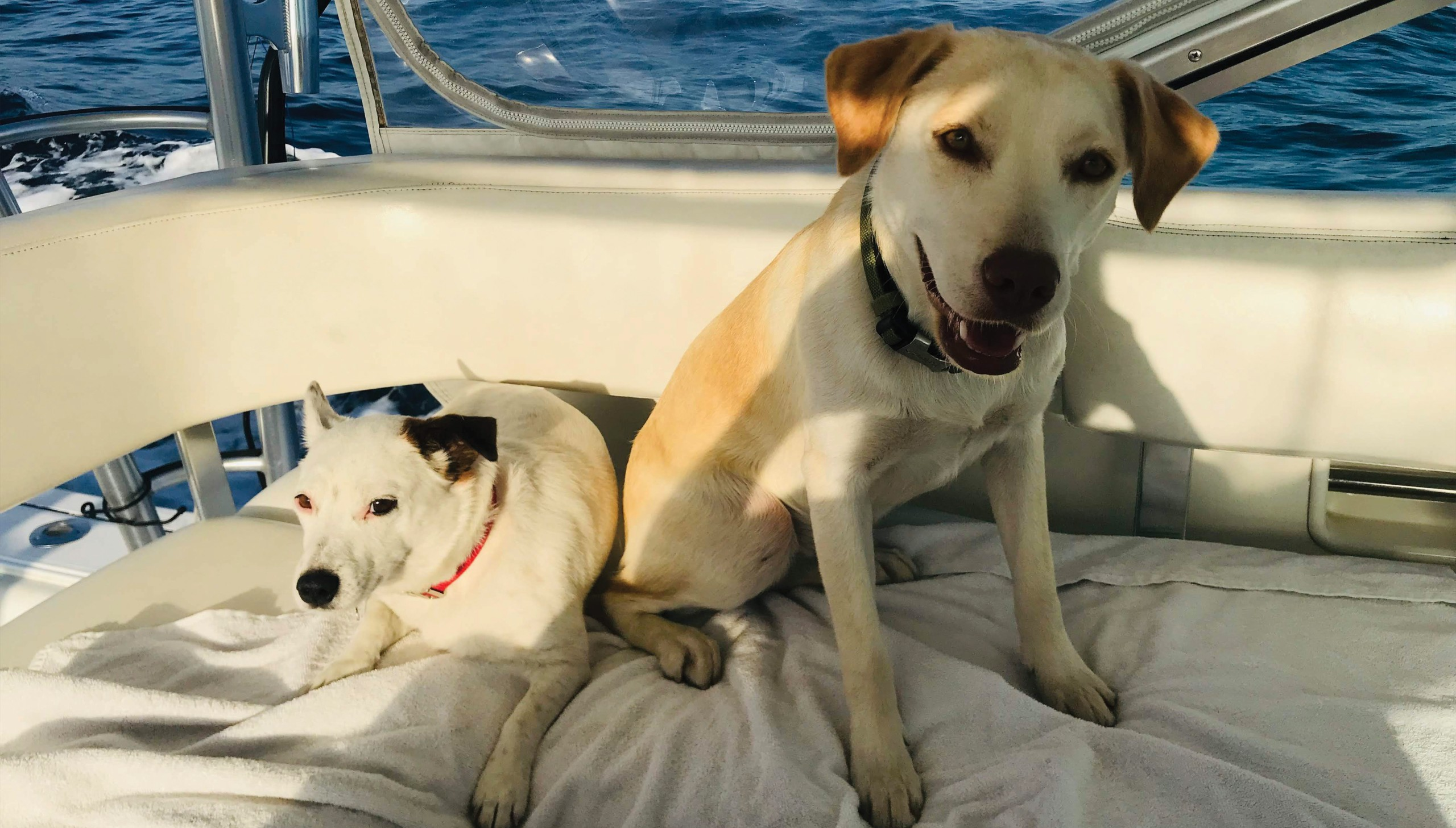 two dogs sitting in bridge of boat