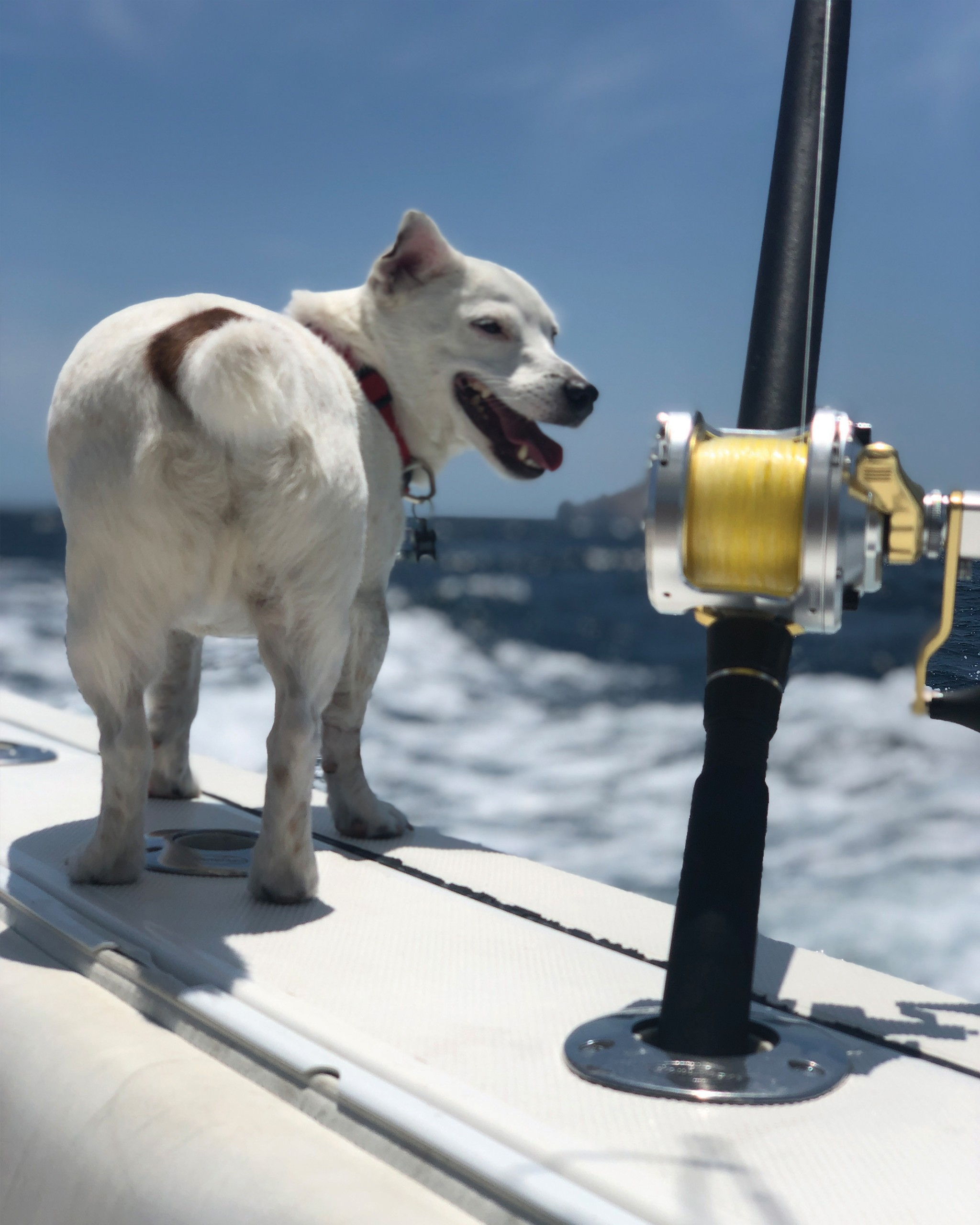 a white dog and a fishing rod with yellow line next to it
