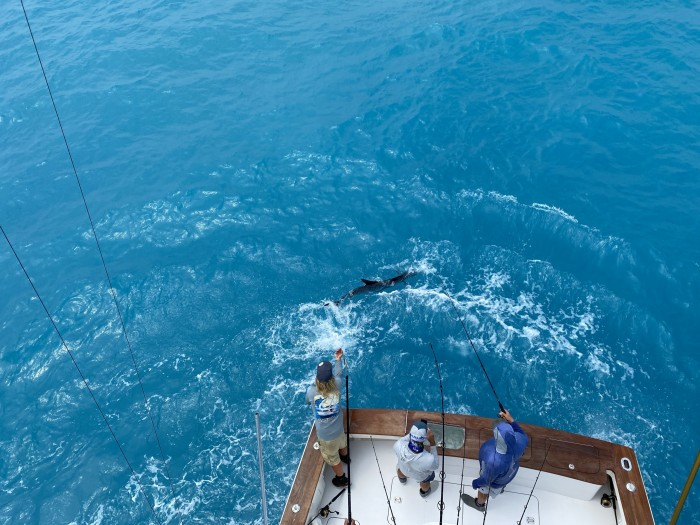 keys sailfish on leader