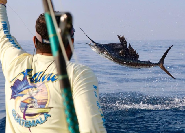 jumping sailfish aboard Allure II