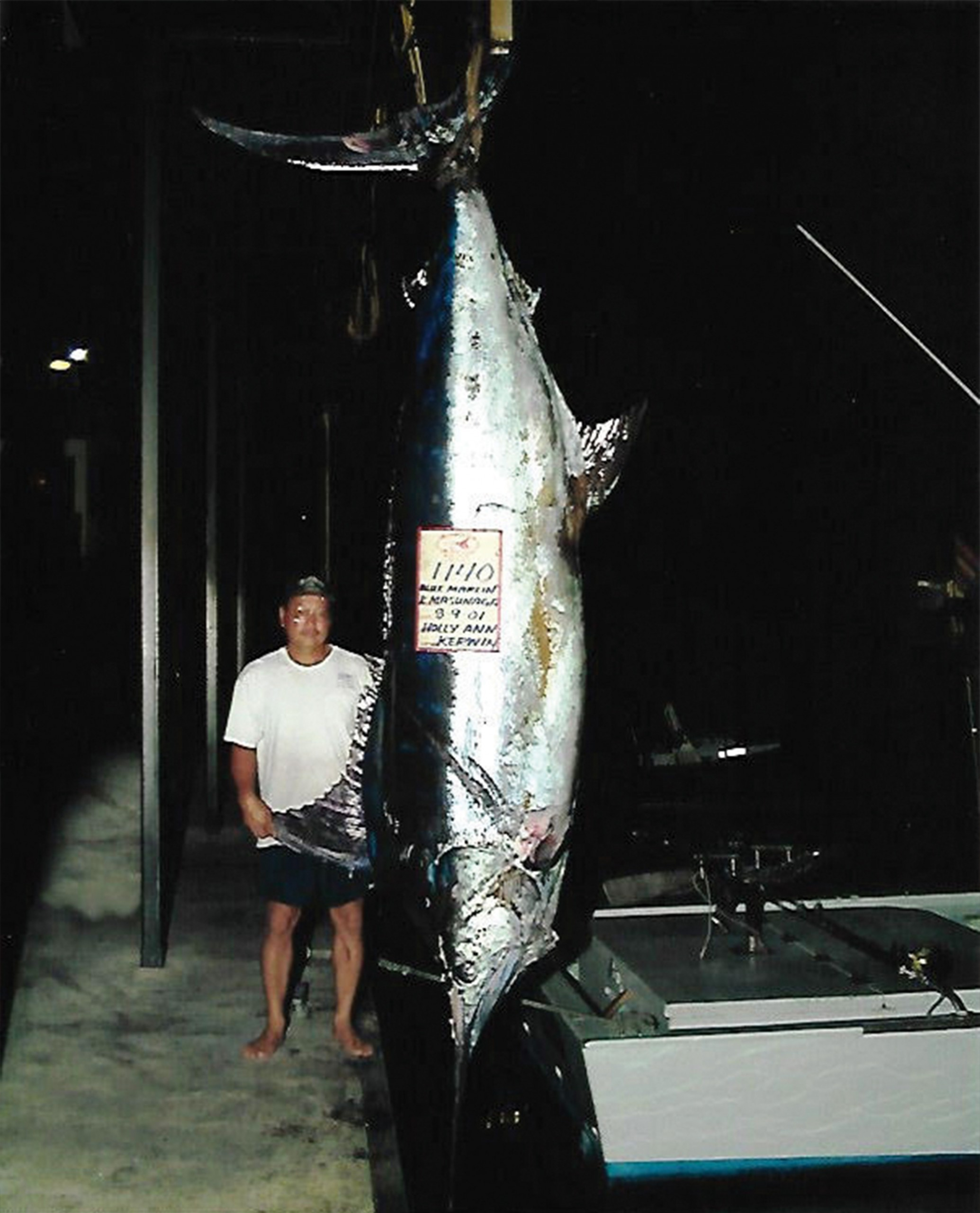1140 lb marlin hanging from a scale