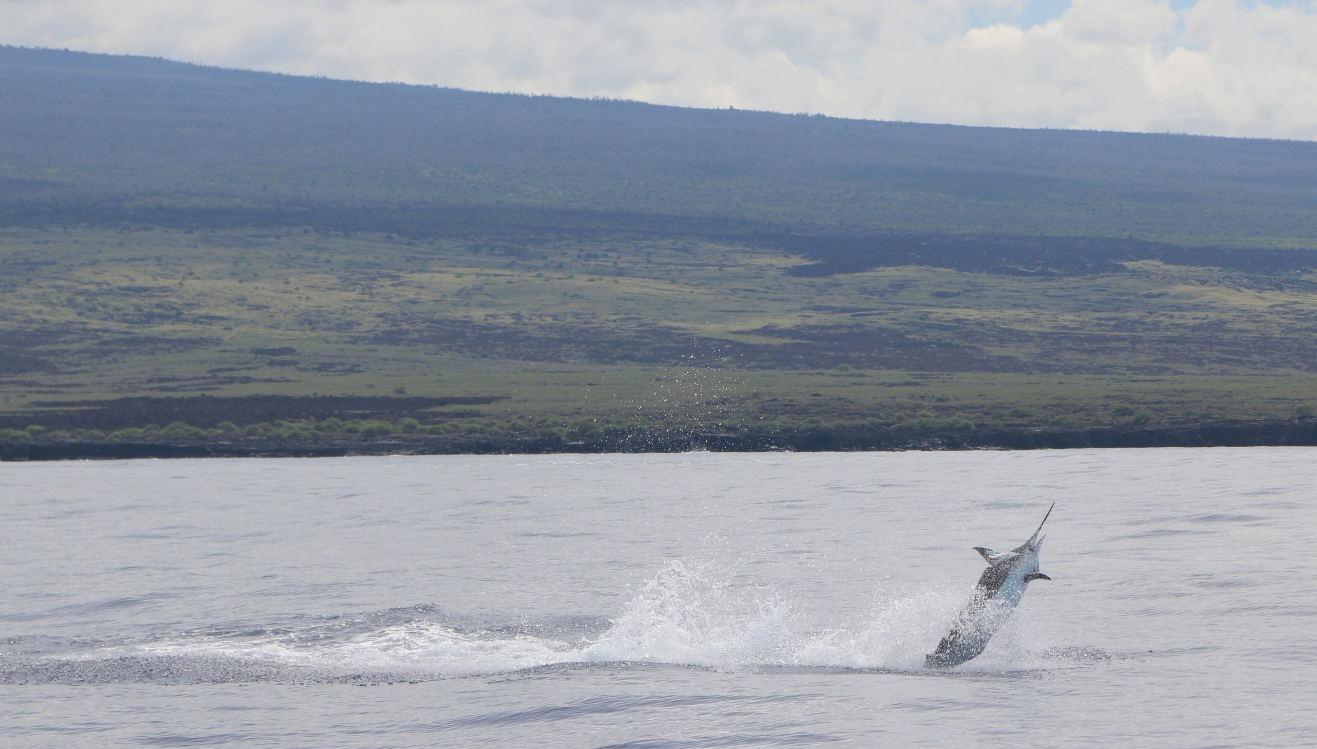 Kona, Hawaii Charter Operating and Marine Event Permits Reinstated