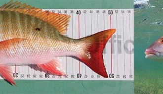 IGFA Expands Release-Based Record Category